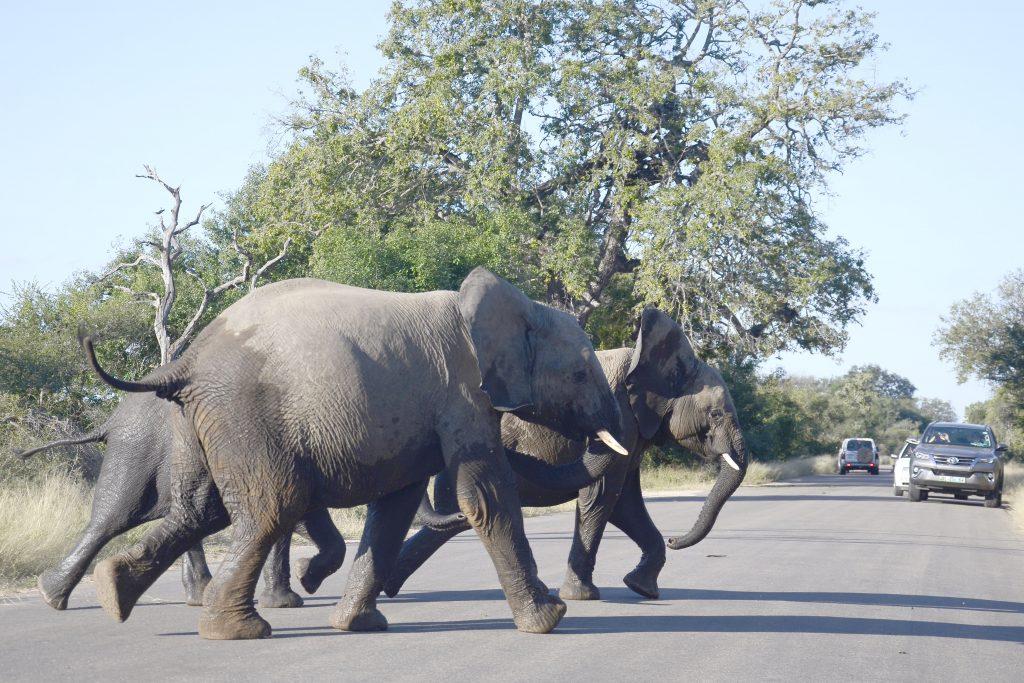 elephants crossing road
