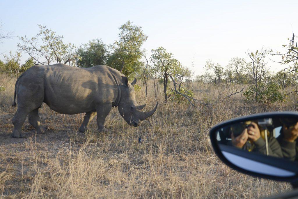 rhino from a car window