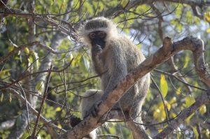 cute monkey sitting in tree