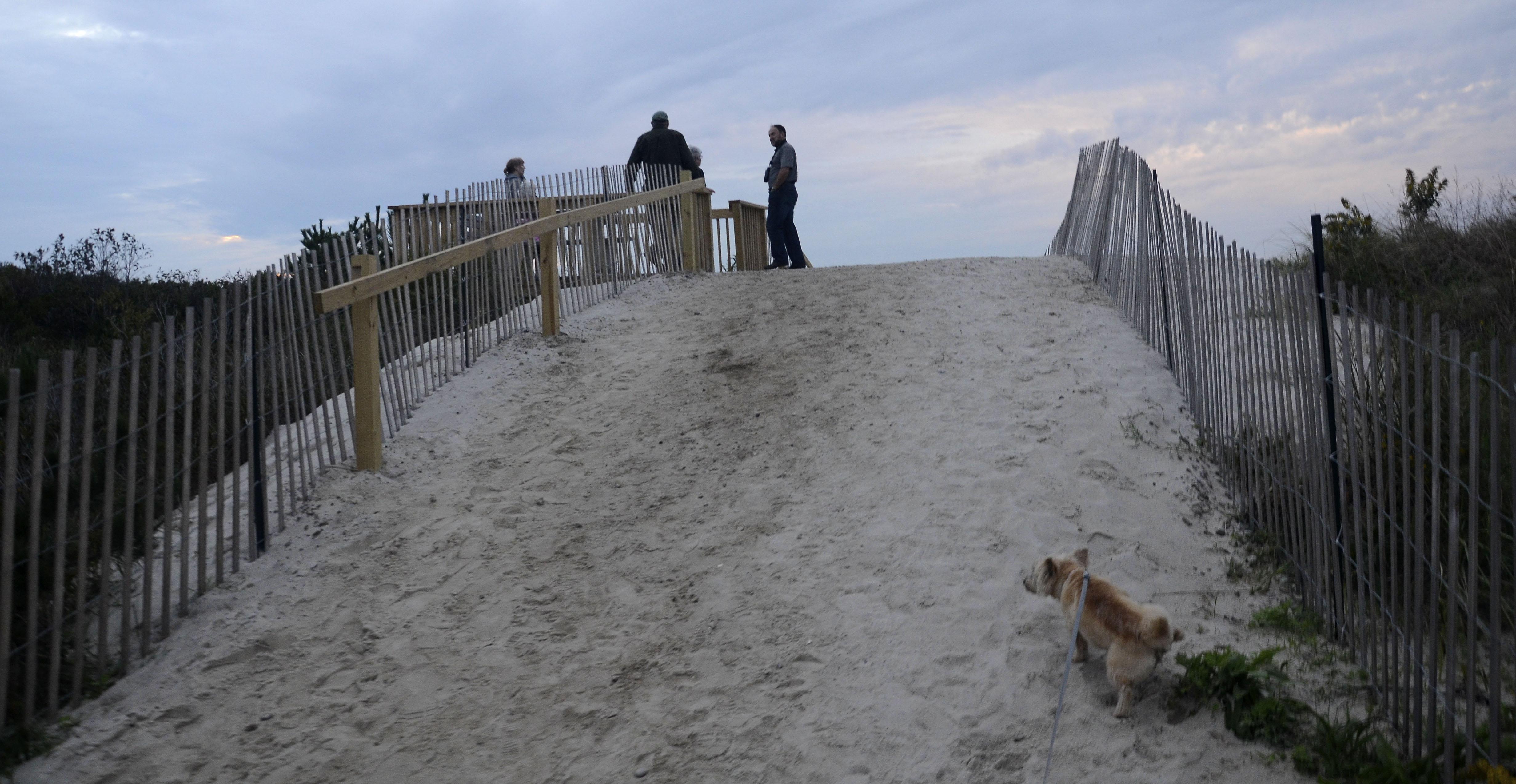 dog walks up hill towards beach