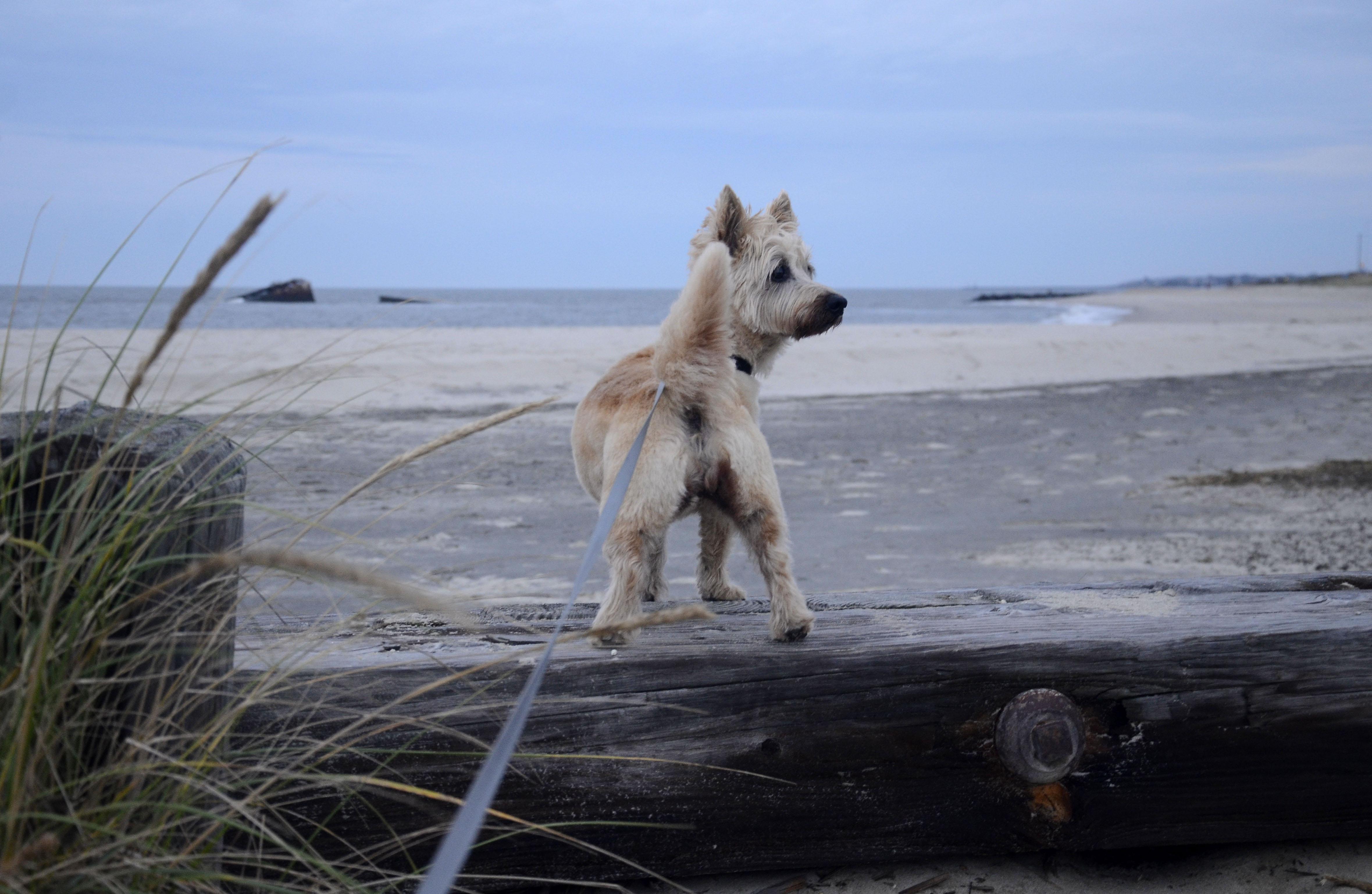 dog looks around on beach