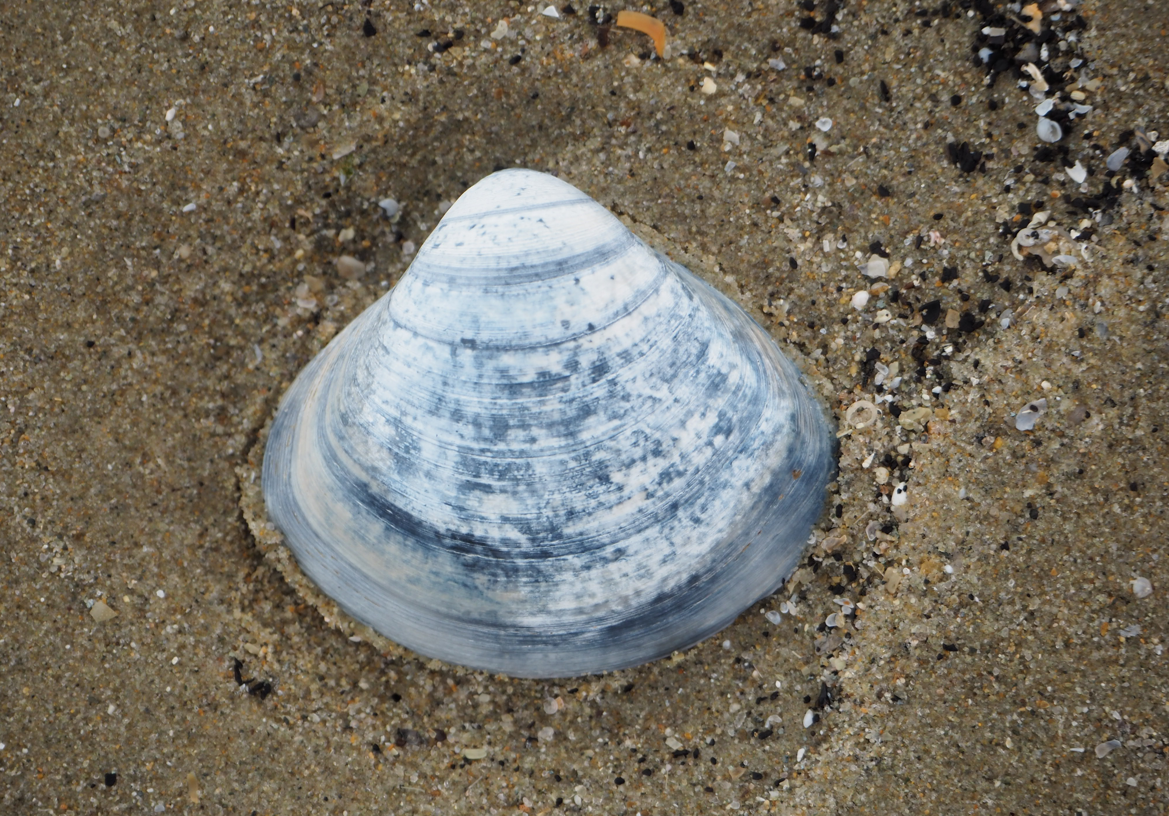 blue shell on sand