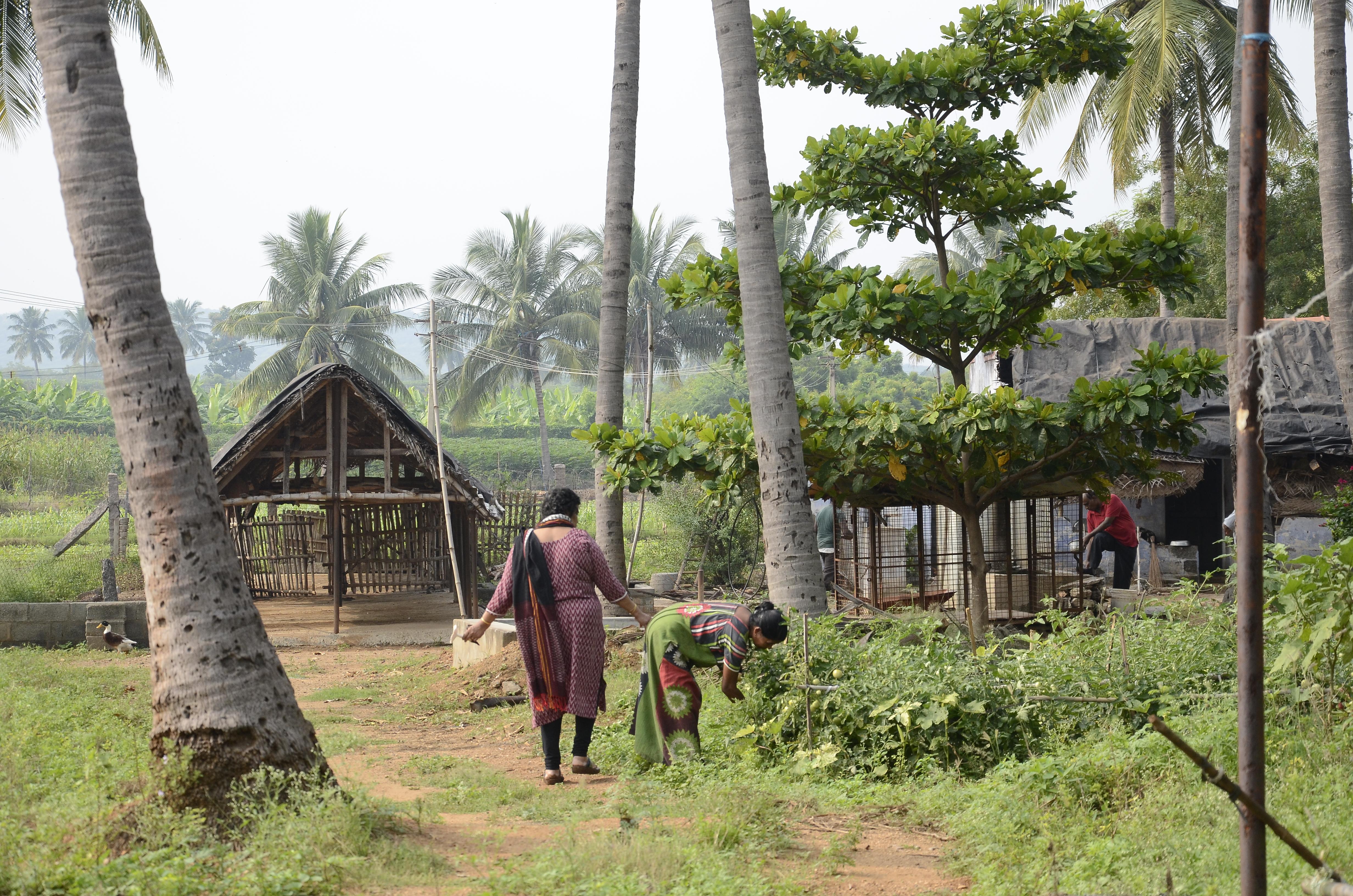 two women walking on the farm