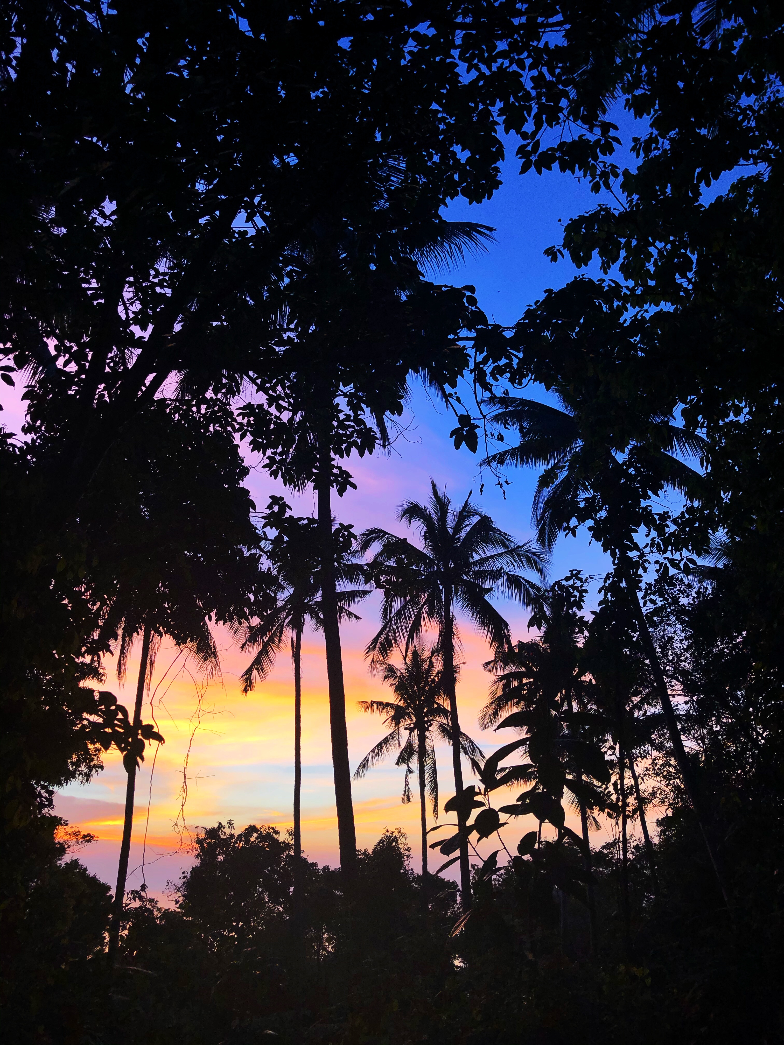 silhouettes of palm trees as the sun sets in the background